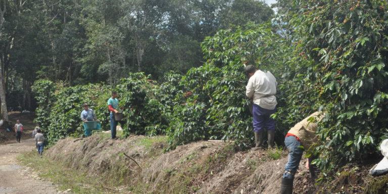 Prévenir le travail des enfants dans des plantations au Panama